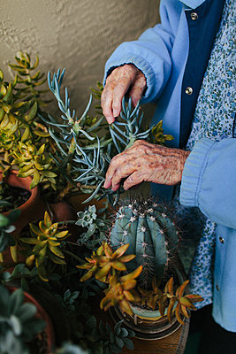 Older mixed race woman caring for potted plants - p555m1408710 by Shestock