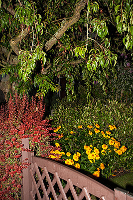 Garden at night - p703m833428 by Anna Stumpf