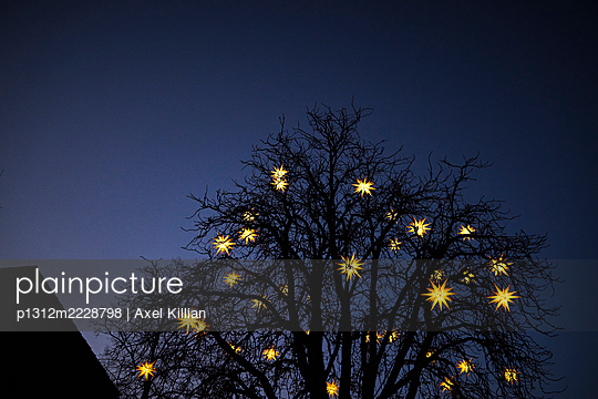 Germany, Tree with stars as Christmas illumination in the evening - p1312m2228798 by Axel Killian