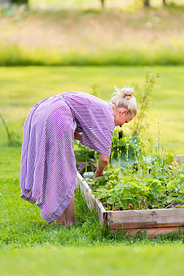 Woman gardening - p312m1493501 by Rebecca Wallin