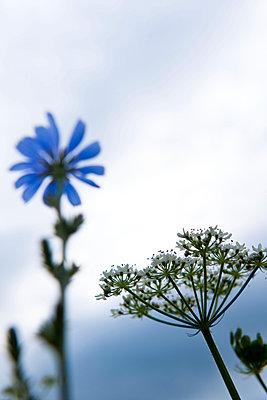 Delicate wild flowers - p533m1068432 by Böhm Monika