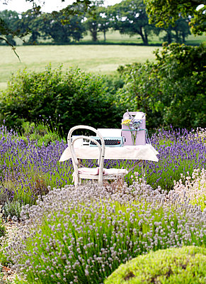 Typewriter on table in lavender;  Isle of Wight;  UK - p349m920077 by Rachel Whiting