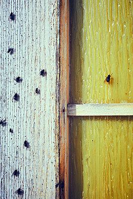 Stubenfliegen - p900m1515152 von Michael Moser