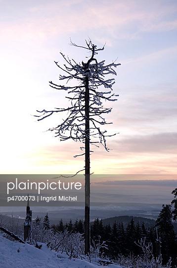 Toter Baum - p4700073 von Ingrid Michel