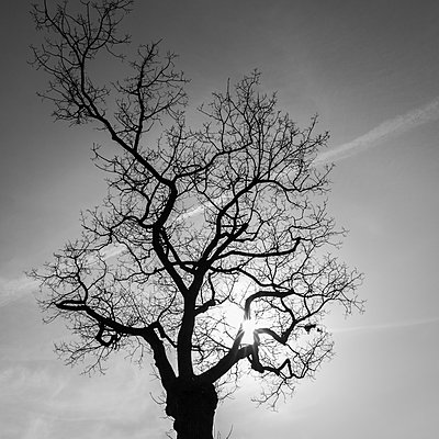 Tree in backlit - p360m2015526 by Ralf Brocke