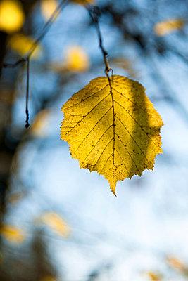 Yellow leaf - p533m955766 by Böhm Monika