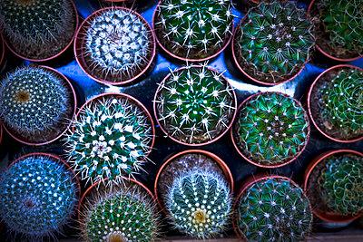 Cacti - p1149m1511188 by Yvonne Röder