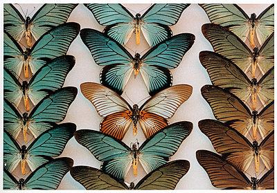Butterflies - p1205m1020923 von Annet van der Voort