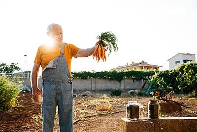 Senior man harvesting carrots - p300m2029482 by Josep Rovirosa