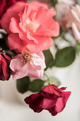 Roses - p971m916375 by Reilika Landen