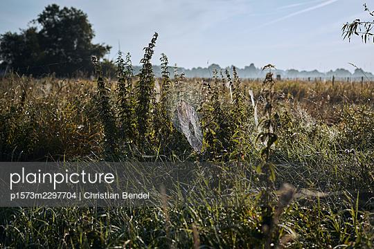 Autumn cobweb - p1573m2297704 by Christian Bendel