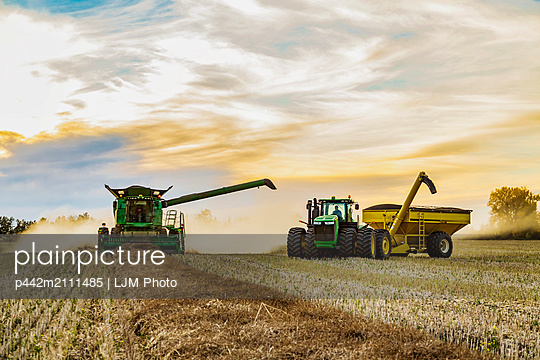 Canola harvesting and transferring the seeds to a grain buggy pulled by a tractor at sunset; Legal, Alberta, Canada - p442m2111485 by LJM Photo