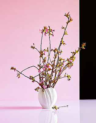 Cherry blossom branches in a vase - p1397m2184316 by David Prince