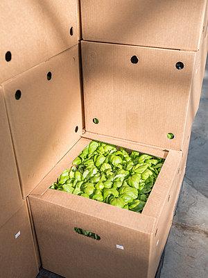 Künstlicher und autarken Anbau von Gemüse - p390m2053575 von Frank Herfort