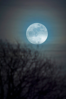 Germany, moon rise with bare tree in the foreground - p300m1019414f by Ulrich Hagemann