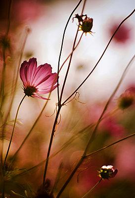 Blumen - p1432m1492910 von Svetlana Bekyarova