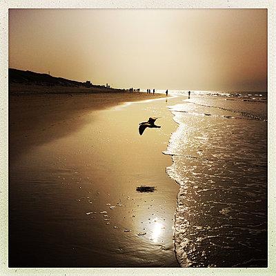 Beach walk - p1670m2253541 by HANNAH