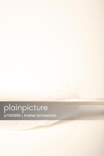 Weiße Feder - p1650856 von Andrea Schoenrock