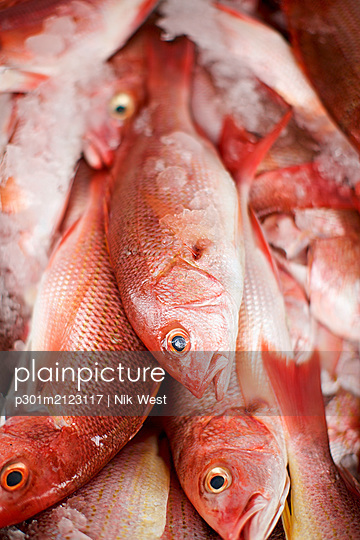 Close up red snapper fish on ice - p301m2123117 by Nik West
