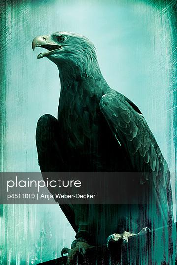 Eagle - p4511019 by Anja Weber-Decker
