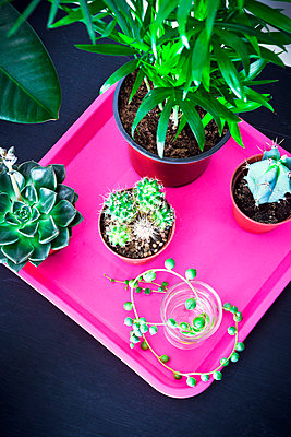Top view of several green foliage plants on wooden table - p1166m2113444 by Cavan Images