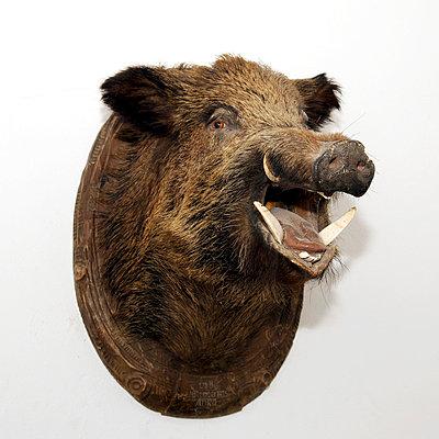 Hunting trophy - p4510451 by Anja Weber-Decker
