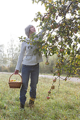 Apple harvest - p454m764424 by Lubitz + Dorner