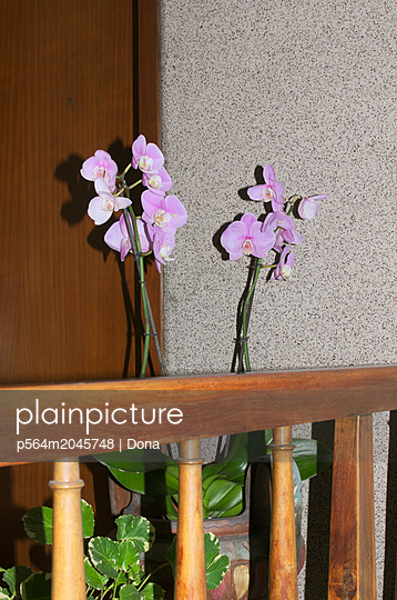 Orchids at the entrance - p564m2045748 by Dona