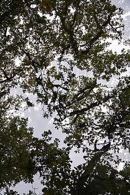Baumkronen - p1682m2263437 von Régine Heintz