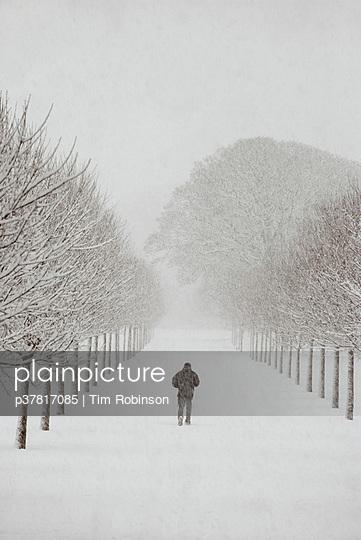 Figure in snowy landscape - p37817085 by Tim Robinson