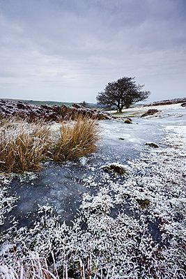 Snow and ice on Porlock Common in winter, Exmoor National Park, Somerset, England, United Kingdom, Europe - p8713021 by Adam Burton