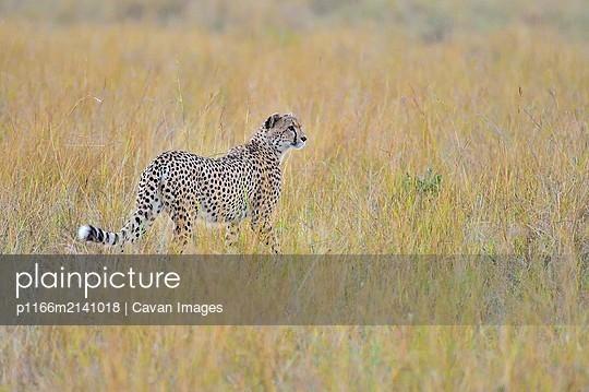 p1166m2141018 von Cavan Images