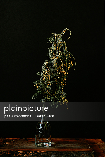 Withered cut flowers in a vase - p1190m2288990 by Sarah Eick
