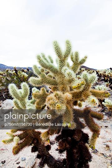 Palm Springs - p756m1158730 von Bénédicte Lassalle