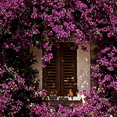 Window among purple flowers - p1065m1183392 by KNSY Bande
