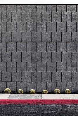 Dwarf cacti in front of stone wall - p1094m1559738 by Patrick Strattner