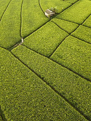 Indonesia, Bali, Aerial view of rice fields - p300m2029850 by Konstantin Trubavin