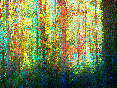 Forest in bright colours, multiple exposure - p1248m2287876 by miguel sobreira