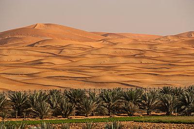 Palmen in Wüstenlandschaft - p280m1137333 von victor s. brigola