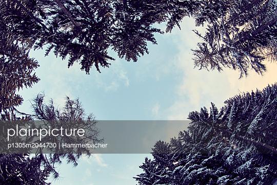 Bäume - p1305m2044730 von Hammerbacher