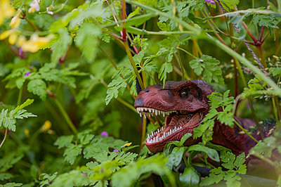 Toy dinosaur hiding in garden plants - p1047m1475143 by Sally Mundy
