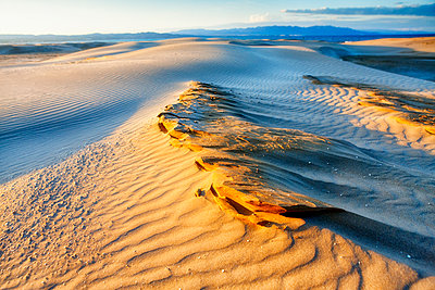 Spain, Tarragona, Ebro Delta, dune at twilight - p300m1205151 by David Santiago Garcia
