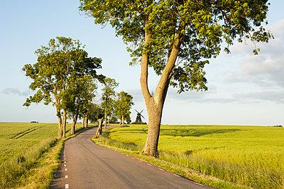 Sweden, Skane, Krageholm, country road in rural scene - p352m1349323 by Gustaf Emanuelsson