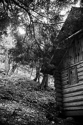 Exterior of Cabin in Woods with Sunlight Filtering Down Through Trees - p694m844241 by Eric Schwortz