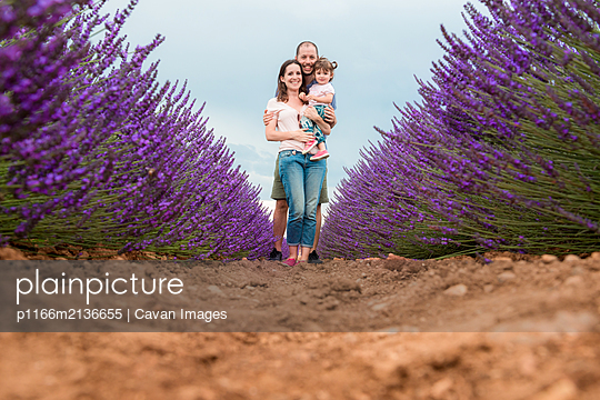 Happy family walking among lavender fields in the summer - p1166m2136655 by Cavan Images