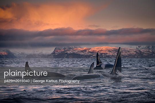 p429m2019340 von George Karbus Photography