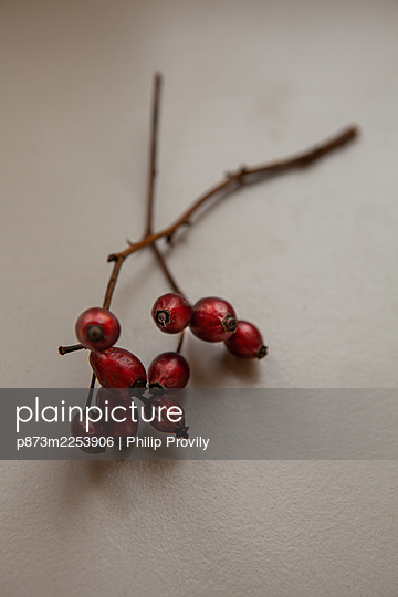 Rose hip - p873m2253906 by Philip Provily