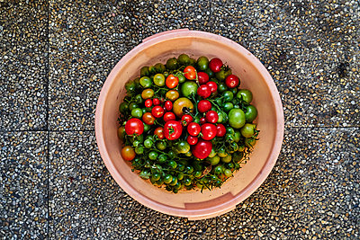 Various tomatoes in a bucket - p1312m2134846 by Axel Killian