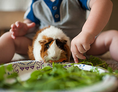 Close-up of baby boy feeding plants to guinea pig at home - p1166m2067875 by Cavan Images