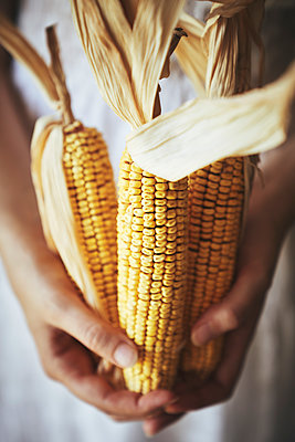 Woman holding corncobs - p968m2020218 by roberto pastrovicchio
